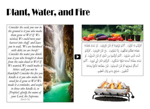 Plant, Water, and Fire